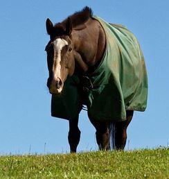 Paardendeken-groen